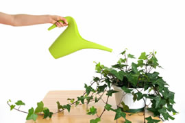 English ivy removes toxins