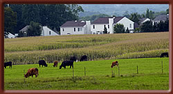 A Guide to Selling Properties in Agricultural Areas